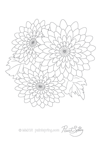 Chrysanthemum Flowers Adult Coloring Page