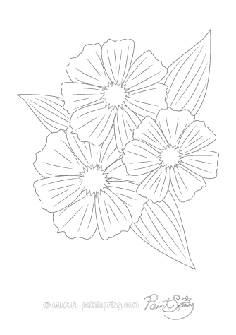 Cosmos Flower Adult Coloring Page