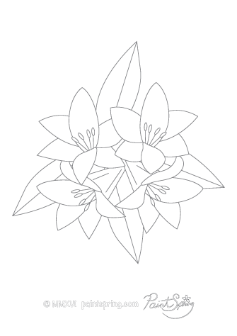 Lily Flower Adult Coloring Page