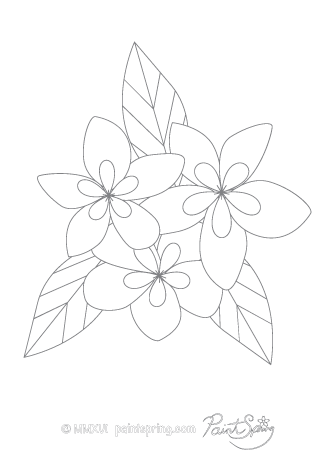 Plumeria Flower Adult Coloring Page