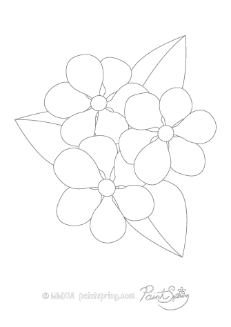 Vinca Flower Adult Coloring Page